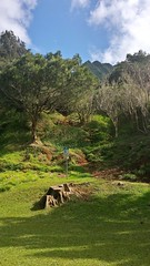 Nuuanu Pali (photawwgraphy) Tags: travel blue trees vacation sky plants green tourism nature clouds outdoors hawaii landscapes scenery pretty natural oahu hiking scenic naturallight nuuanupali windwardcoast