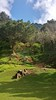Nuuanu Pali (photawwgraphy) Tags: travel blue trees vacation sky plants green tourism nature clouds outdoors hawaii landscapes scenery pretty natural oahu hiking scenic naturallight nuuanupali windwardcoast