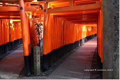 Dos Caminos.Two Ways (ironde) Tags: red black japan rojo kyoto cross negro kioto shinto torii jinja cruce sinto japn doscaminos shintoism fushimiinaritaisha twoways sintoismo nikond7000 ironde