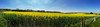 113.365.2015 Its a beautiful day (Claire Plumridge) Tags: field wide panoramic 365 day113 rapeseed 2015 itsabeautifulday 365project iphone6 2015yip 3652015 115picsin2015 115picturesin2015 2015ayearinpictures 1133652015