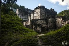 Tikal, Guatemala (Scott Walmsley) Tags: park travel wild beauty rain america forest temple monkey spider ancient ruins hiking guatemala wildlife central national backpacking mayan jungle latin tikal tropical backpacker peten