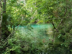 Spring Pool (alansurfin) Tags: blue wild green water pool spring woods stream florida clear springs freshwater