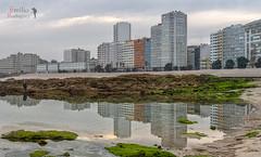 Reflejos. (Playa de Riazor, La Coruña). (Emilio Rodríguez Álvarez) Tags: españa canon eos mar coruña iso400 galicia 7d atlántico reflejos oceano lacoruña 1350 sigma500mm ƒ67