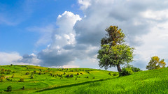 Feel the nature. (drstar.) Tags: tree green nature clouds landscape flickr single fields afterrain flickrturkey feelthenature olympusomd