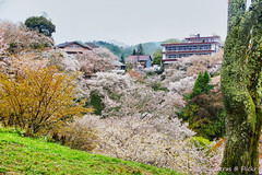 Yoshinoyama (Tatters ) Tags: trees houses japan village cherryblossom yoshino yoshinoyama oloneo