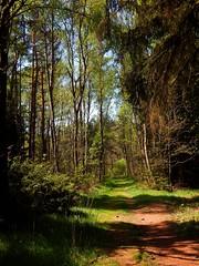 Forest walk / Waldspaziergang ... (Caledoniafan (Astrid)) Tags: germany deutschland nikon path saxony hike sachsen footpath schnberg weg wanderung vogtland caledoniafan nikoncoolpixl820