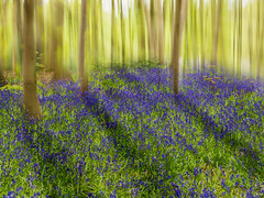 The Bluebells of Weeford (Dave Boam) Tags: camera trees tree bluebells landscape movement meadow icm midlands weeford