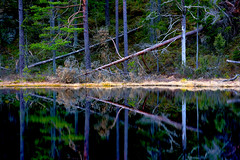 Fen (ksvala) Tags: trees reflection nature pine natur symmetry fen trd symmetri spegling tallar tjrn