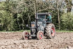 driving lesson (Fotos aus OWL) Tags: traktor landwirtschaft bulldog lanz schlepper traktorentreffen