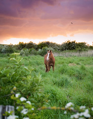Stunning Horse Standing Under A Beautiful Sunset (hoykimberley) Tags: pink blue sunset horse brown cute nature beautiful grass animal yellow pretty natural wildlife adorable shy beaty stunning nikond3200