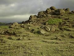 CF001431 (professor126) Tags: maui kapalua travelphotography landscapephotography phaseone iq280