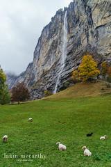 Europe 2015 - EDIT 1 -02879 (mccarthylakin) Tags: switzerland europe places lauterbrunnen eurotrip2015