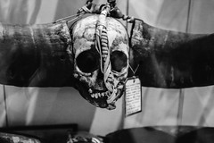 QF4C7701 (leslilundgren) Tags: skull teeth bones pittriversmuseum