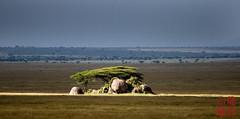 Illuminated Kopje (DragonSpeed) Tags: africa landscape tanzania safari tz kopje serengetinationalpark shinyanga seroneraregion tzday03 africanwildcatsexpeditions