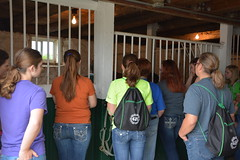 2016 4-H Exploration Days (msuanrc) Tags: explorationdays 4hexplorationdays 4h learning youth youthdevelopment camp horses girls handling halter baby