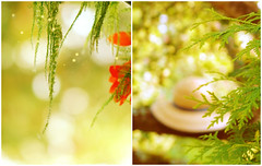 To live happily is an inward power of the soul. (mintukka) Tags: light summer stilllife tree green nature hat fairytale forest garden diptych bokeh strawhat dippy