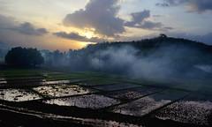Mystic Monsoon Morning (Deepak Parulekar) Tags: konkan monsoon morning nature sky paddy fog
