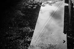 Caught at the edge | Streets of Gokarna,India. (vjisin) Tags: she street blackandwhite india reflection bird water monochrome lines clouds composition nikon asia outdoor pigeon streetphotography gokarna karnataka cwc nikond3200 nikonindia chennaiweekendclickers nikonofficial cwc534
