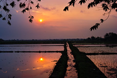 Paddy field reflection (elly.sugab) Tags: sunset sun sky cloud sundown dusk sore paddy sawah reflection