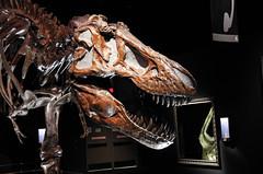 T-Rex (juan_guthrie) Tags: drumheller alberta royaltyrrellmuseum dynosaur