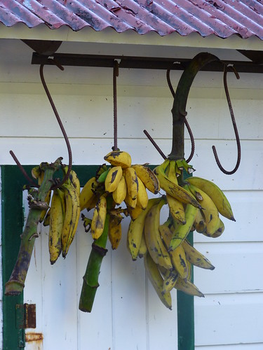 Jayuya, Hacienda Gripinas plantains