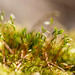 Moss up close