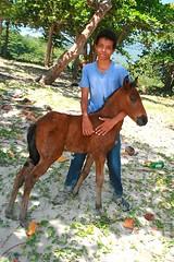 Puerto Plata DR - Costa Dorado (Lonfunguy) Tags: boy horse dominicanrepublic puertoplata foal costadorado