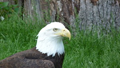 """2015-05-17_personal_zoo_trip_240 • <a style=""""font-size:0.8em;"""" href=""""http://www.flickr.com/photos/77994446@N03/17798679001/"""" target=""""_blank"""">View on Flickr</a>"""
