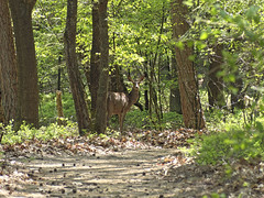 Nationaal Park de Hoge Veluwe (ericderedelijkheid) Tags: reddeer hert hogeveluwe edelhert