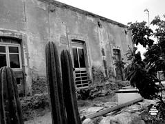 sampedro (Wabi Medina) Tags: cactus bw white blancoynegro blanco rural y negro monocromtico