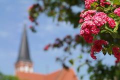 Kirchenblick (digitalsucher) Tags: color bokeh samsung 55mm m42 18 voigtlnder ultron 5518 colorultron nx300