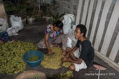 2015. Bali. Munduk. (Marisa y Angel) Tags: bali indonesia 2015 munduk