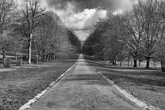 To the end (Greatdog) Tags: blackandwhite landscape cornwall lanhydrock cloudsstormssunsetssunrises