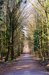 wooded path (ercastrob) Tags: trees germany spring woods hessen path sunny oberursel
