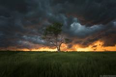 Somewhere In Kansas (Erik Johnson Photography) Tags: blue sunset sky sun tree green field weather clouds mouth landscape outdoors golden photo midwest glow photographer purple outdoor farm wheat farming stock national hour ag kansas fields lone whales prairie agriculture geographic goldenhour