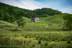 Out to pasture (Kelly Lambert Photography) Tags: county blue mountains barn rural nc nikon farm country north ridge carolina backroads ashe farmlife