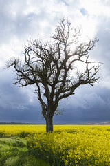 AleXBooK-5423 (AleX.D - SuShY**) Tags: sun france jaune canon soleil bleu uga campagne arbre 1022 colza canon7d