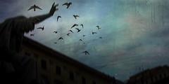 Birds sing for their lives (P. Correia) Tags: 2005 rome roma swallows davidsylvian ninehorses pcorreia zorancoach10