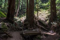 Trail - Muir Woods National Monument - Marin County - California - 08 June 2016 (goatlockerguns) Tags: sanfrancisco california county trees usa mountains west monument nature forest coast nationalpark woods natural hiking marin unitedstatesofamerica coastal national bayarea nationalparks sausalito muir millvalley northbay