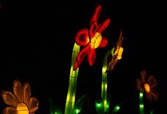 _DSC9673_2 (Elii D.) Tags: light fish flower animal night zoo monkey neon dragons lantern lampion dargon