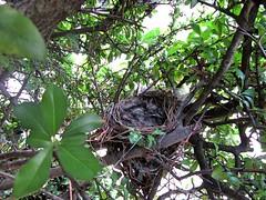 IMG_1212_Fotor01 (Ela's Zeichnungen und Fotografie) Tags: baby nest natur hannover tier vogel busch kcken