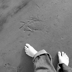 canid, hominid, fowl... (Star, LaikazEyes: zazzle.com) Tags: bw dog bird feet beach square sand toes footprints human fowl hominid canid dsc0707