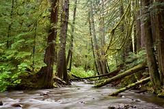 rainforest (JulyRiver) Tags: rainforest oregon