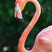 columbus zoo - flamingo