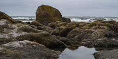 Beach 4, Olympic National Park, tide pools (kurtloup) Tags: beach4 olympicnationalpark tidepools nikkor 55mm f35 micro ais