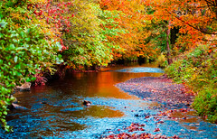 Shades of autumn (Steve-h) Tags: nature natura natur naturaleza river riverdodder autumn fall reflections leaves colour colours red orange gold yellow green blue riverbed stones pebbles trees weeds riverside riverbanks rathfarnham dublin ireland europe eu digital exposure ef eos canon camera telephoto zoom lens october 2015 steveh adobe photoshop lightroom happyslidersunday hss allrightsreserved