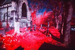 St Luke's Church (Fitzrovia) Tags: anglican superheadz vivitar graves graveyard stone stones plasticlens aerochrome infrared ultrawideandslim fpp kodak plasticcamera colorinfrared plastic colourinfrared