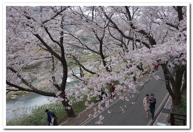 화개십리벚꽃길26