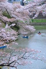 櫻。千鳥ヶ淵 (ArthurJo) Tags: tokyo 桜 sakura 東京 櫻花 櫻 千鳥ヶ淵 千鳥之淵
