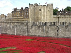 Poppies below Beauchamp Tower (jere7my) Tags: greatbritain vacation england london castle history memorial unitedkingdom wwi treasury historic prison worldwari poppies soldiers moat unionjack fortress englishhistory arrowslits toweroflondon veterans artinstallation 1066 casualties commemoration 2014 centenary royalmint wardead thetoweroflondon crenelations tompiper beauchamptower hermajestysroyalpalaceandfortress paulcummins towerpoppies bloodsweptlandsandseasofred 888246 ceramicpoppies